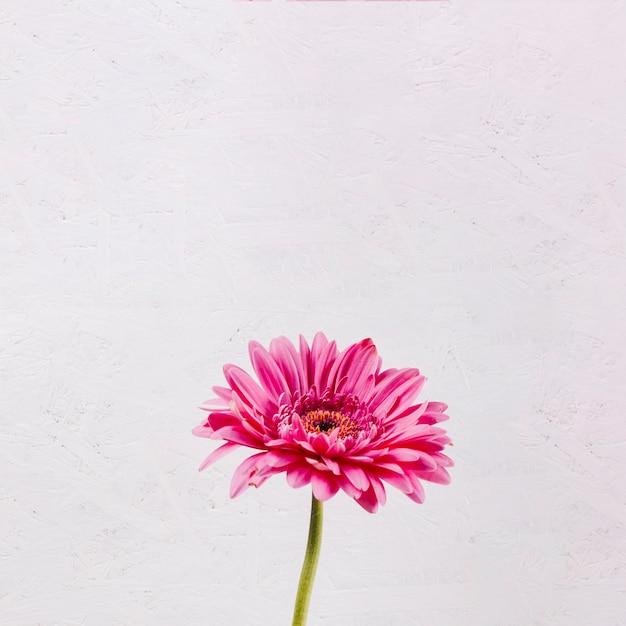 Decoratieve kleurrijke bloemen Gratis Foto