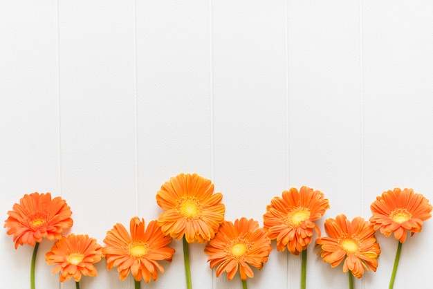 Decoratieve kleurrijke madeliefjebloemen op een achtergrond Gratis Foto