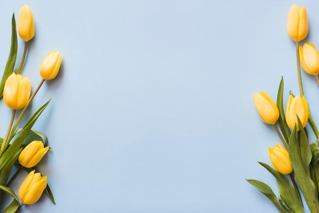 Decoratieve kleurrijke tulpenbloemen op een achtergrond Premium Foto