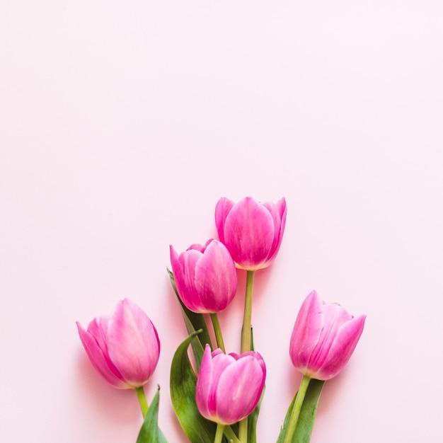 Decoratieve kleurrijke tulpenbloemen op een achtergrond Gratis Foto