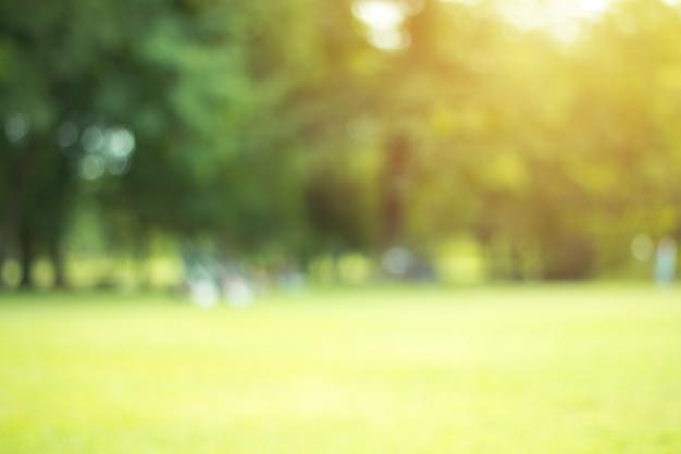 Defocused bokeh achtergrond van tuin met tot bloei komende bomen in zonnige dag, achtergrond, de zomertijd Premium Foto
