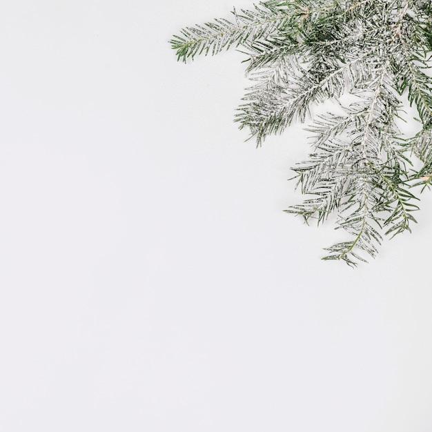 Dennenboomtak met sneeuw wordt behandeld die Gratis Foto