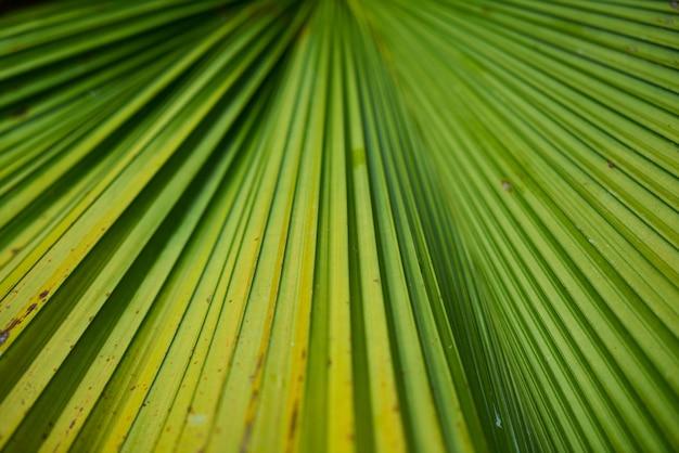Detail close park groen textuur Gratis Foto