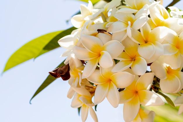 Dichte menings tropische gele en witte bloemen Gratis Foto