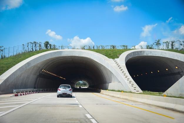 Dieren in het wild oversteken op snelweg in bos road tunnel verkeer auto brug dieren over een snelweg Premium Foto