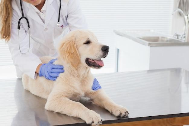 Dierenarts die een hond een controle geeft in een dierenartsenkantoor Premium Foto