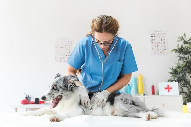 Dierenarts die een leuke hond met een stethoscoop in medisch bureau onderzoekt Gratis Foto