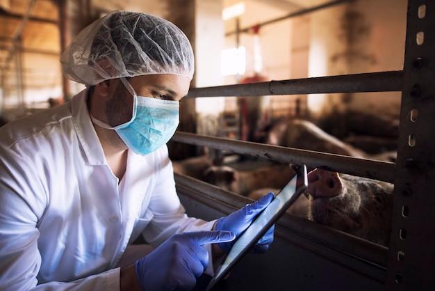 Dierenarts dier arts op varkensboerderij controleren gezondheidsstatus van varkens huisdieren op zijn tabletcomputer in varkenshok Gratis Foto