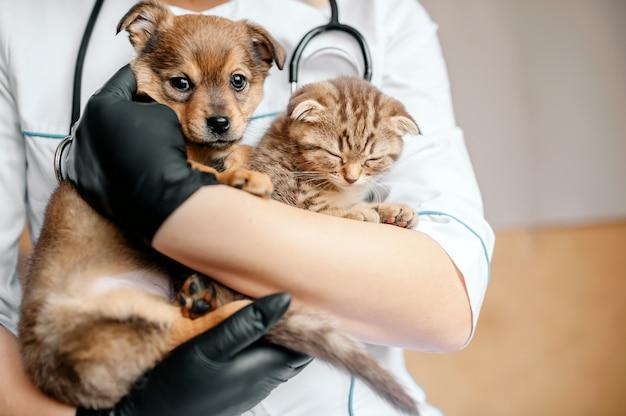 Dierenarts in zwarte handschoenen met een hond en een kat in zijn handen Premium Foto