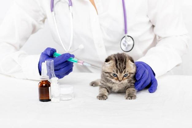 Dierenarts maakt een injectie in een klein kitten in een dierenkliniek. geneeskunde concept Premium Foto