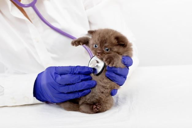 Dierenarts onderzoekt een klein katje met een stethoscoop in een kliniek Premium Foto