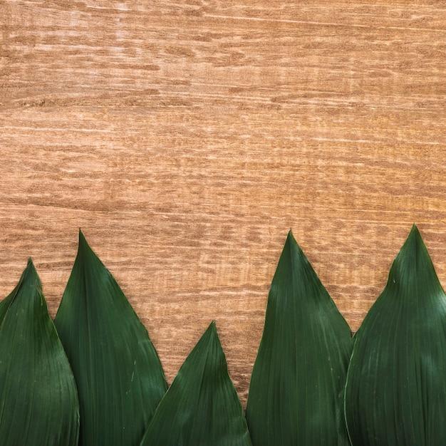 Dikke groene bladeren op tafel Gratis Foto