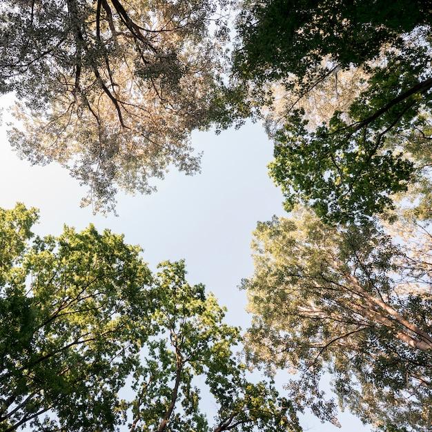 Direct onder van boomtak in tuin Gratis Foto