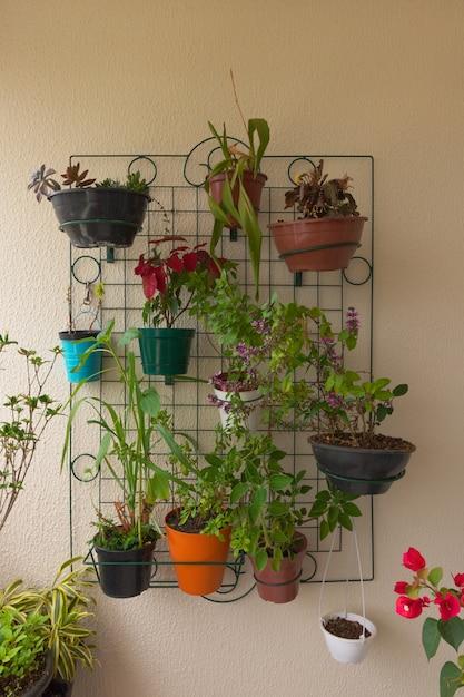 Diverse soorten planten op het balkon van het pand Premium Foto
