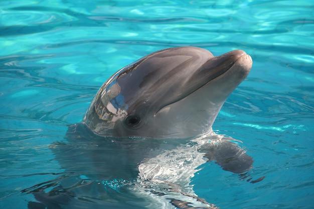 Dolfijn vormt Premium Foto