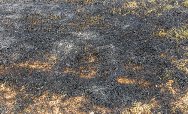 Donker grasveld. Premium Foto