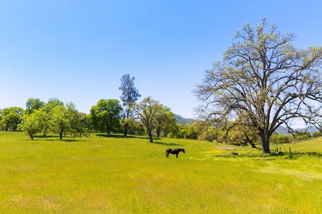Donker paard in de weidenweiden van californië Premium Foto