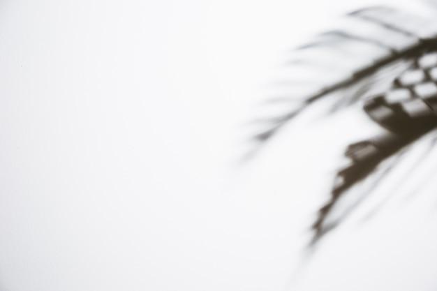 Donkere die bladerenschaduw op witte achtergrond wordt geïsoleerd Gratis Foto