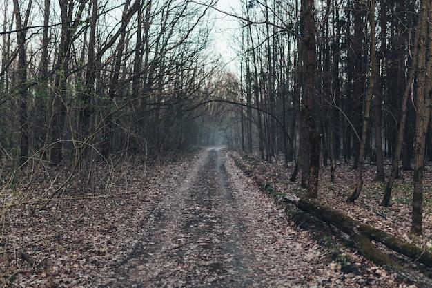 Donkere enge bosweg bij nacht surreal halloween Premium Foto