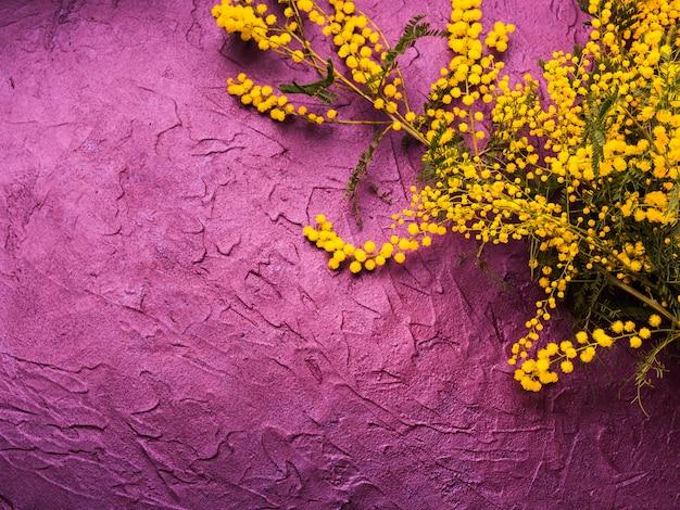 Donkere paarse gestructureerde achtergrond met mimosa Premium Foto