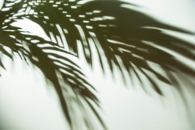 Donkere schaduw van palmbladen op achtergrond Gratis Foto