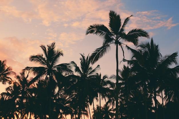 Donkere silhouetten van kokospalmen tegen kleurrijke zonsonderganghemel Premium Foto
