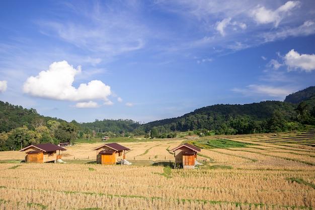 Drie huisjes in het midden van rijstvelden Premium Foto