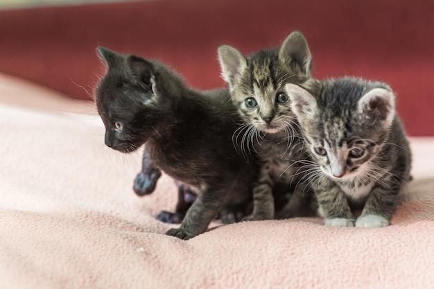 Drie kleine katjes spelen op het bed Premium Foto
