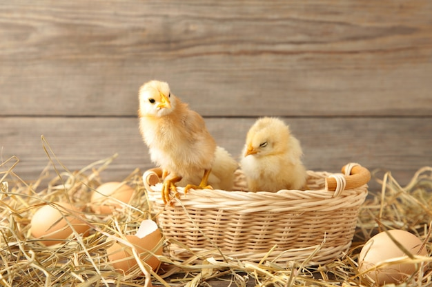 Drie kuikens in een mand op grijze achtergrond bovenaanzicht Premium Foto