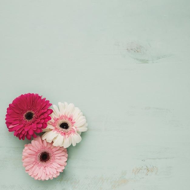 Drie prachtige bloemen Gratis Foto