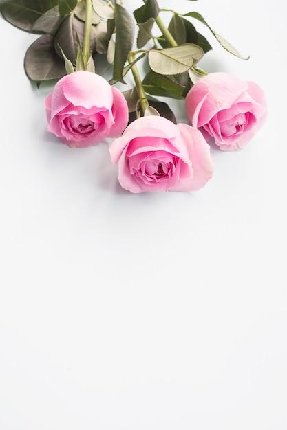 Drie roze rozen op witte achtergrond Gratis Foto