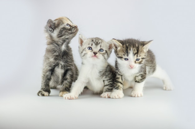 Drie schattige kittens. trio kleine katjes op studioachtergrond Premium Foto