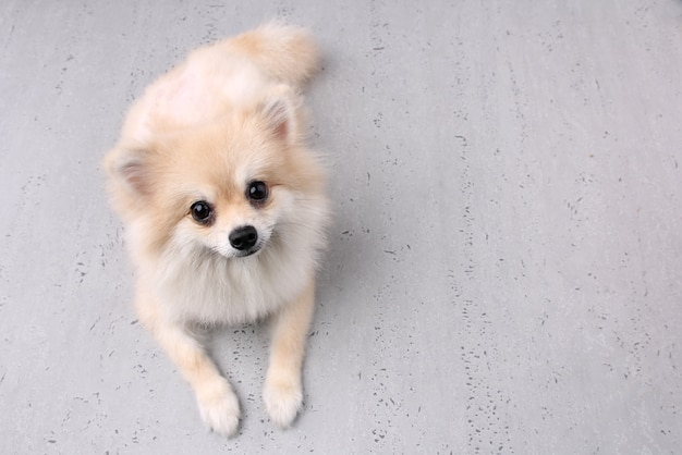 Droevige hond met witte achtergrond. Premium Foto