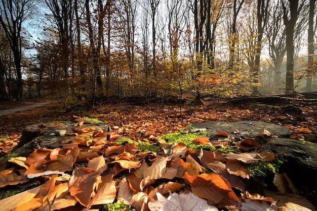 Droge bladeren die de grond bedekken, omringd door bomen in een bos in de herfst Gratis Foto