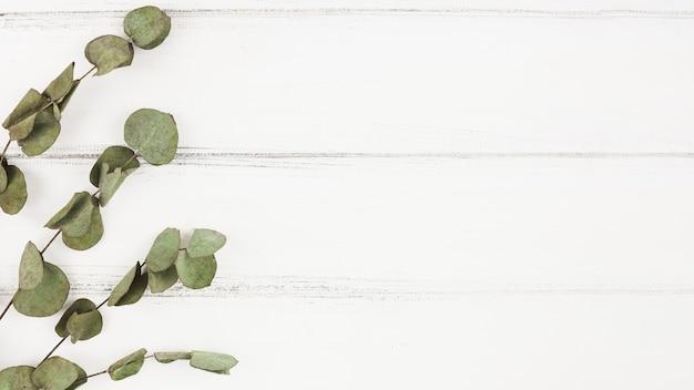 Droge takjes op witte houten achtergrond Gratis Foto