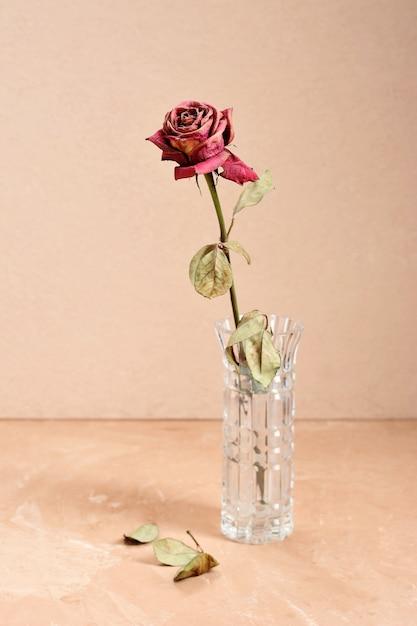 Droog gedroogd nam in een vaas op een roomachtergrond toe Premium Foto