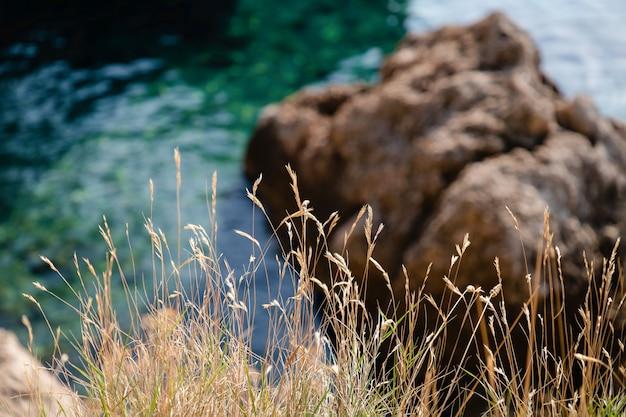 Droog gras en prachtige groene kristalhelder water achtergrond in makarska riviera, kroatië Premium Foto