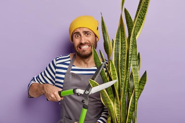 Drukke hardwerkende tuinman snoeit schoonmoederplant voor een goede groei. mannelijke bloemist werkt in bloemenwinkel Gratis Foto