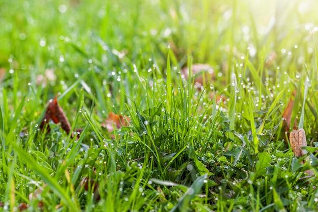 Druppels dauw op een felgroen gras met een zonlicht op de juiste hoek Premium Foto