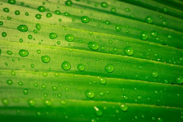 Druppels water op groene bladeren Premium Foto
