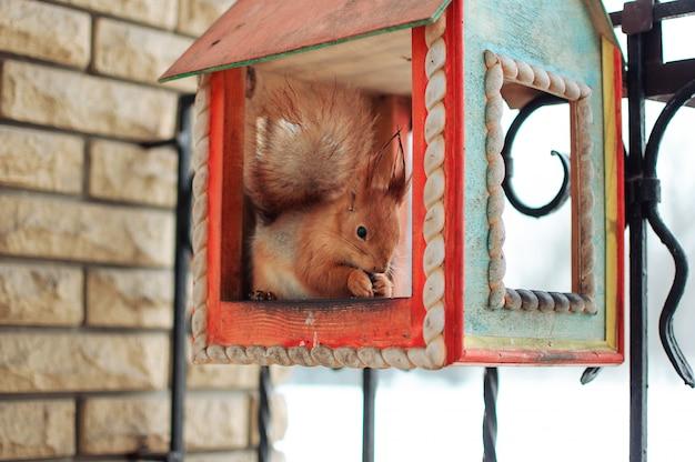 Eekhoornzitting in een voedertrog die noten eten Premium Foto