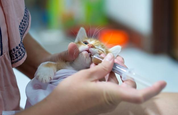 Een aziatische vrouw geeft medicijnen aan een zieke kat. Premium Foto