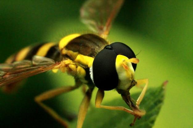 Een bij verzamelt stuifmeel en nectar Premium Foto