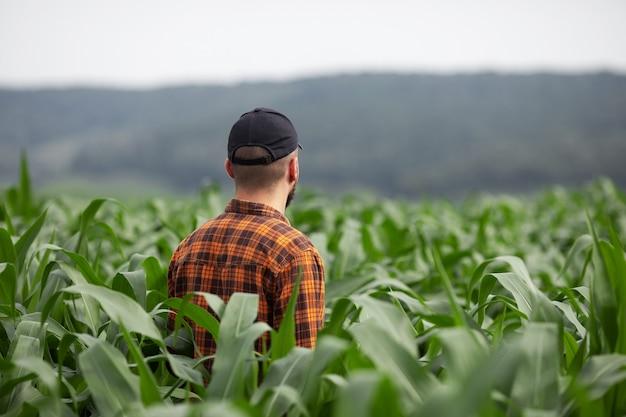 Een boer inspecteert een groot groen maïsveld. Premium Foto