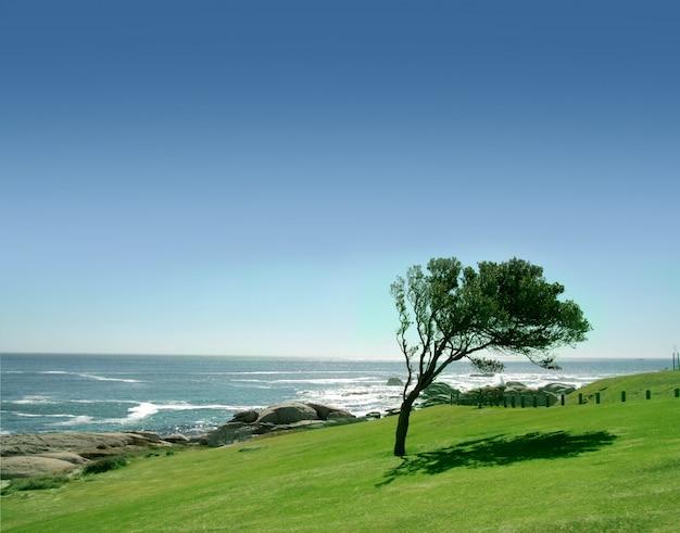 Een boom in een grasveld met zee scape Premium Foto