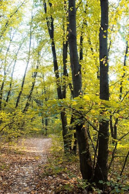 Een bos met een pad door de groene bomen en struiken, gevallen bladeren op de grond, chisinau, moldavië Gratis Foto