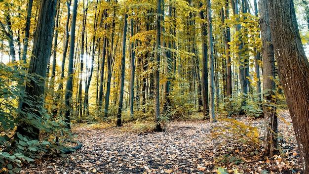 Een bos met veel groen en geel hoge bomen en struiken, gevallen bladeren op de grond, chisinau, moldavië Gratis Foto