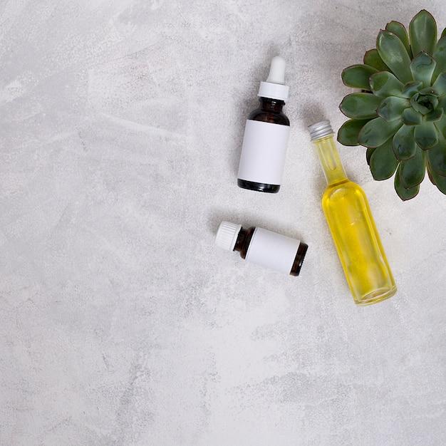 Een bovenaanzicht van cactus plant met etherische olie flessen over de grijze betonnen muur Gratis Foto