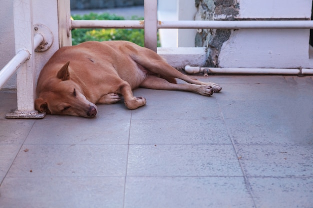 Een bruine verdwaalde straathond die op vloer bij hoek van de bouw slaapt. dierdonatiecampagne Premium Foto
