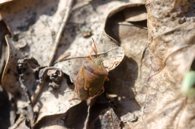 Een close-upfoto van het kleine insect in het bos Premium Foto